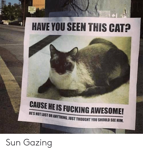 Have You Seen This Cat: HAVE YOU SEEN THIS CAT?  CAUSE HE IS FUCKING AWESOME!  UR ANYTHING, JUST THOUGHT YOU SHOULD SEE HIM Sun Gazing
