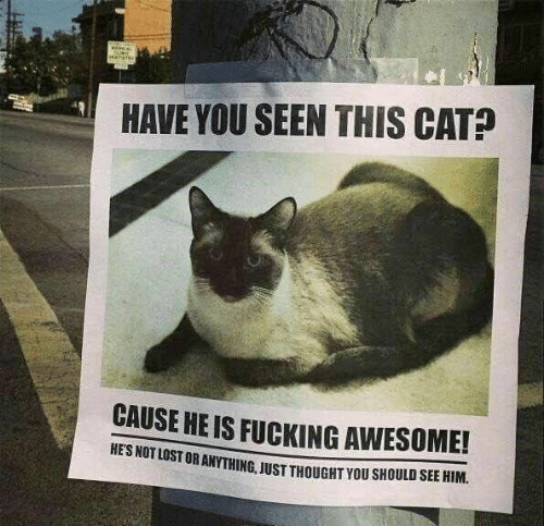 Have You Seen This Cat: HAVE YOU SEEN THIS CAT?  CAUSE HE IS FUCKING AWESOME!  OST OR ANYTHING, JUST THOUGHT YOU SHOULD SEE HIM
