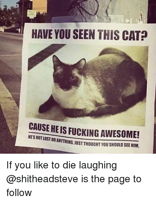 Have You Seen This Cat: HAVE YOU SEEN THIS CAT  CAUSE HEIS FUCKING AWESOME!  HESNOTLOSTOR If you like to die laughing @shitheadsteve is the page to follow