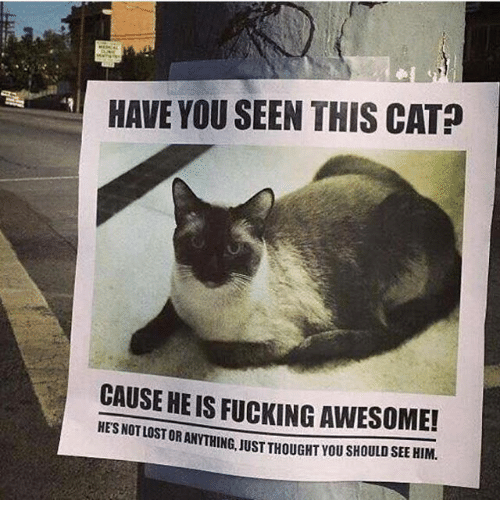 Have You Seen This Cat: HAVE YOU SEEN THIS CAT  CAUSE HEIS FucKING AWESOME!  HESNOTLOSTORAN  JUST THOUGAT YOU SHOULD SEE HIM