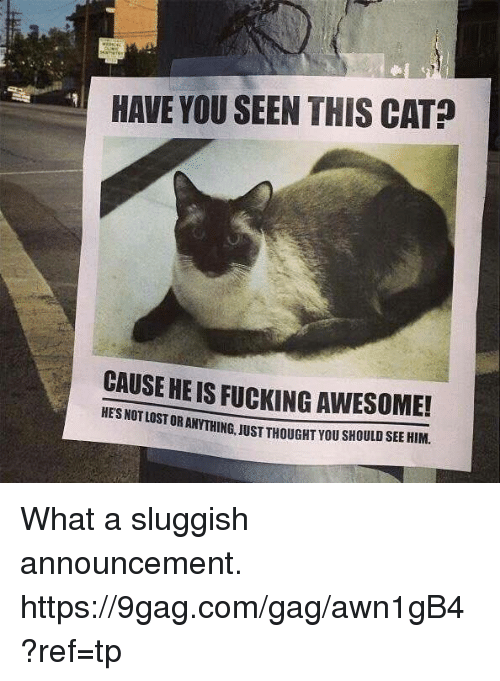 Have You Seen This Cat: HAVE YOU SEEN THIS CAT?  CAUSE HEIS FUCKING AWESOME!  STORANTHING, JUST THOUGHT you sHOULD SEE HIM. What a sluggish announcement. https://9gag.com/gag/awn1gB4?ref=tp
