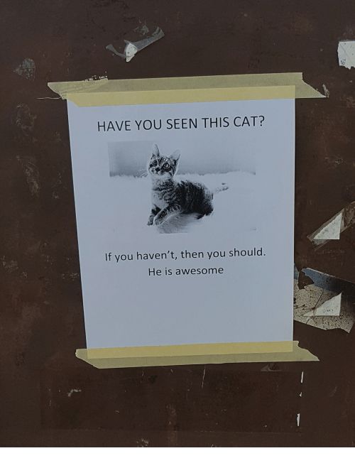 Have You Seen This Cat: HAVE YOU SEEN THIS CAT?  If you haven't, then you should  He is awesome