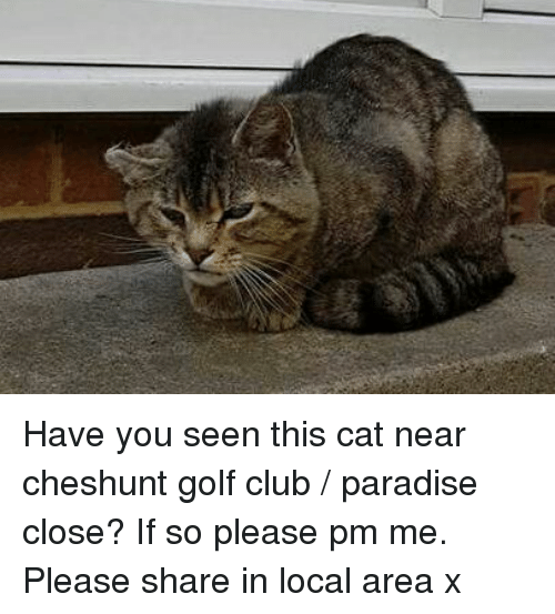 Have You Seen This Cat: Have you seen this cat near cheshunt golf club / paradise close? If so please pm me. Please share in local area x