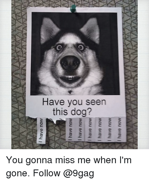 have you seen this: Have you seen  this dog? You gonna miss me when I'm gone. Follow @9gag