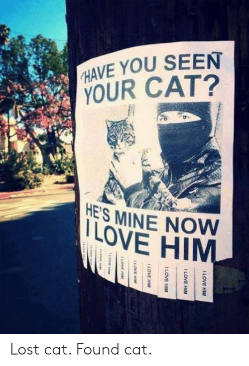 Lost Cat: HAVE YOU SEEN  YOUR CAT?  ES MINE NOW  LOVE HIM Lost cat. Found cat.