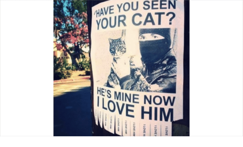 he's mine: HAVE YOU SEEN  YOUR CAT?  HES MINE NOW  LOVE HIM