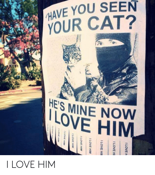 he's mine: HAVE YOU SEEN  YOUR CAT?  HE'S MINE NOW  LOVE HIM I LOVE HIM