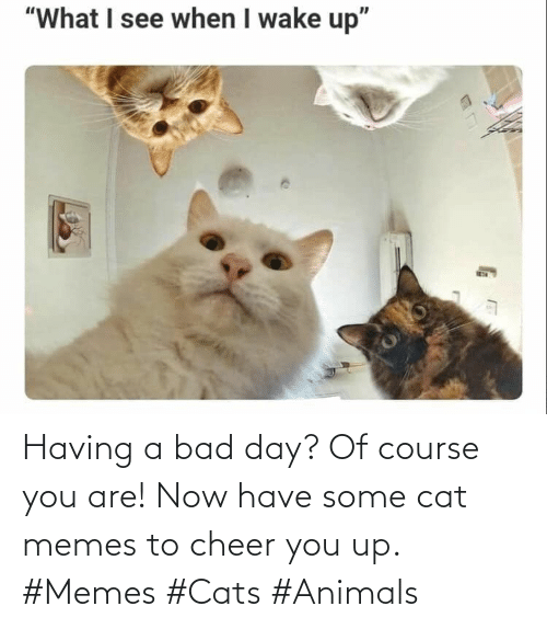 Memes To: Having a bad day? Of course you are! Now have some cat memes to cheer you up. #Memes #Cats #Animals