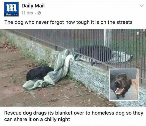 the streets: HDaily Mail  11 hrs  MailOnline  The dog who never forgot how tough it is on the streets  Rescue dog drags its blanket over to homeless dog so they  can share it on a chilly night