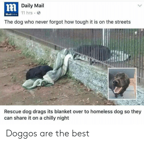 Homeless, Streets, and Best: HDaily Mail  mail Crililne 11 hrs.  The dog who never forgot how tough it is on the streets  Rescue dog drags its blanket over to homeless dog so they  can share it on a chilly night Doggos are the best