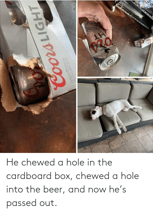 box: He chewed a hole in the cardboard box, chewed a hole into the beer, and now he's passed out.