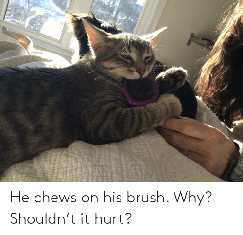 Chews: He chews on his brush. Why? Shouldn't it hurt?