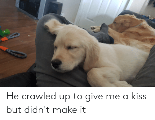 Give Me A Kiss: He crawled up to give me a kiss but didn't make it