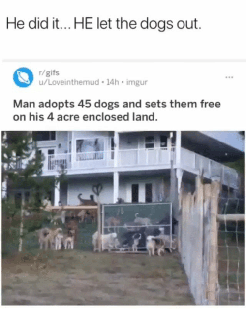 acre: He did it...HE let the dogs out.  r/gifs  u/Loveinthemud 14h imgur  ees  Man adopts 45 dogs and sets them free  on his 4 acre enclosed land.