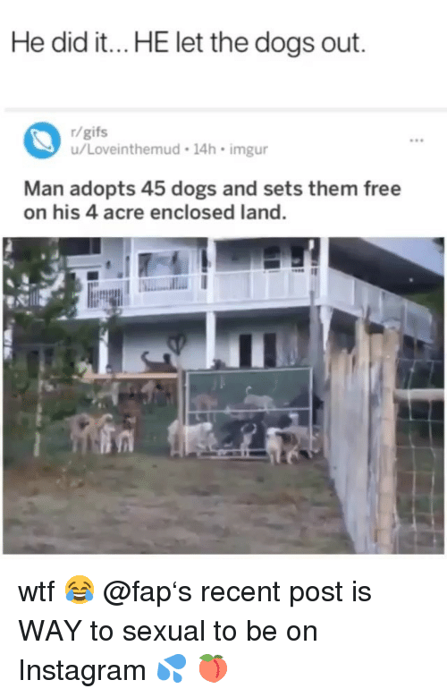 acre: He did it...HE let the dogs out.  r/gifs  u/Loveinthemud 14h imgur  9e  Man adopts 45 dogs and sets them free  on his 4 acre enclosed land. wtf 😂 @fap's recent post is WAY to sexual to be on Instagram 💦 🍑