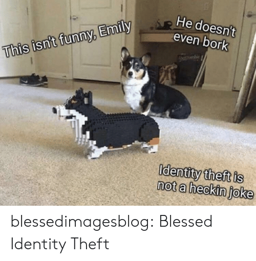 Emily: He doesn't  even bork  This isn't funny, Emily  Identity theft is  not a heckin joke blessedimagesblog:  Blessed Identity Theft