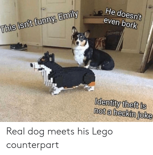 Emily: He doesn't  even bork  whie  This isn't funny, Emily  Identity theft is  not a heckin joke Real dog meets his Lego counterpart
