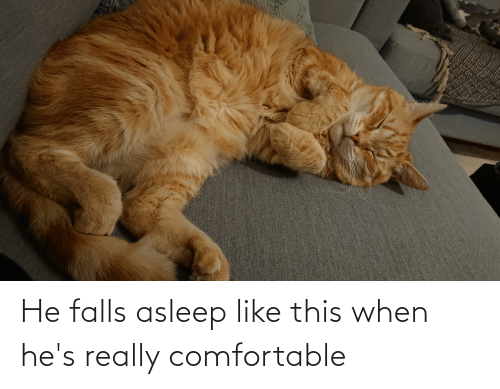 really: He falls asleep like this when he's really comfortable
