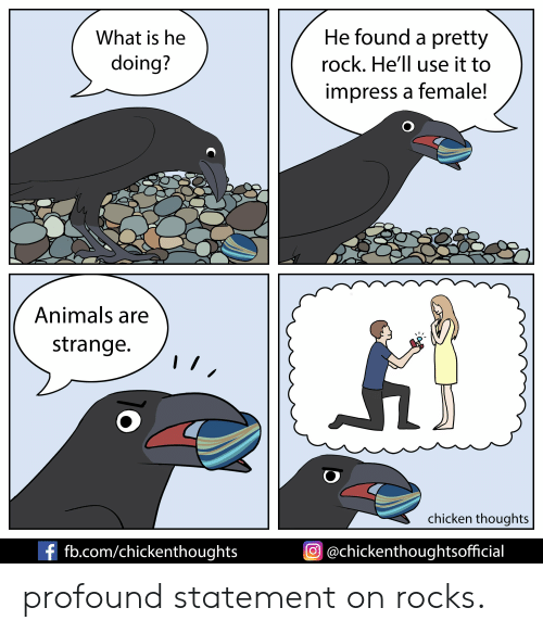 Animals, Chicken, and fb.com: He found a pretty  What is he  doing?  rock. He'll use it to  impress a female!  Animals are  strange.  chicken thoughts  f fb.com/chickenthoughts  @chickenthoughtsofficial profound statement on rocks.