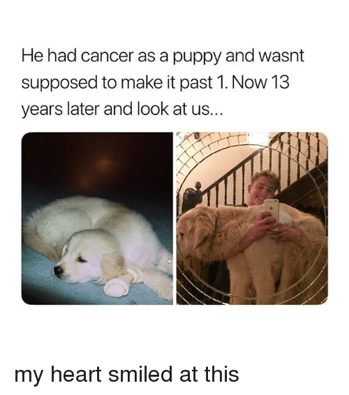 Cancer, Heart, and Puppy: He had cancer as a puppy and wasnt  supposed to make it past 1. Now 13  years later and look at us... my heart smiled at this