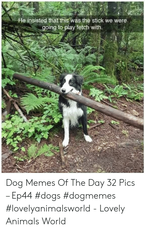 fetch: He insisted that this was the stick we were  going to play fetch with. Dog Memes Of The Day 32 Pics – Ep44 #dogs #dogmemes #lovelyanimalsworld - Lovely Animals World
