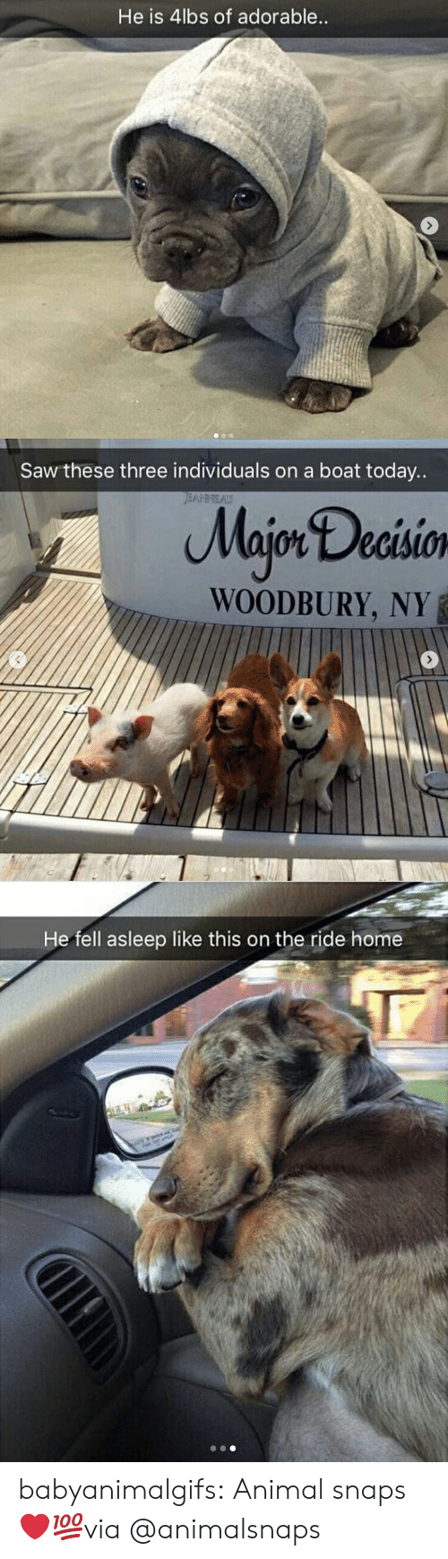 Ny: He is 4lbs of adorable   Saw these three individuals on a boat today..  Majon Decisio  WOODBURY, NY   He fell asleep like this on the ride home babyanimalgifs:  Animal snaps ❤💯via @animalsnaps
