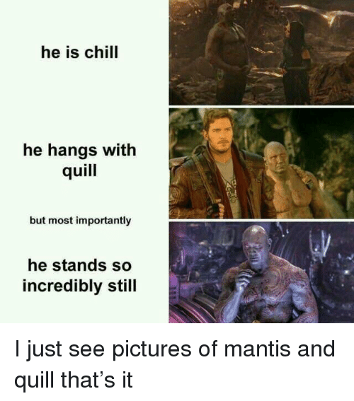Quill: he is chill  he hangs with  quill  but most importantly  he stands so  incredibly still I just see pictures of mantis and quill that's it