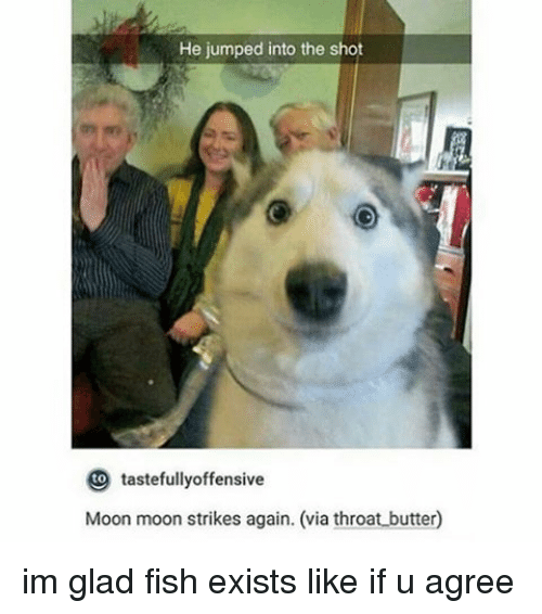 tastefully offensive: He jumped into the shot  tastefully offensive  Moon moon strikes again. (via throat butter0 im glad fish exists like if u agree