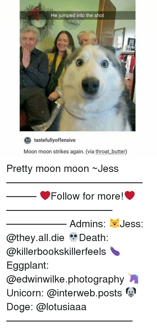 interweb: He jumped into the shot  tastefullyoffensive  Moon moon strikes again. (via throat butter) Pretty moon moon ~Jess —————————————–——— ❤️Follow for more!❤️ ——————————–—————— Admins: 🐱Jess: @they.all.die 💀Death: @killerbookskillerfeels 🍆Eggplant: @edwinwilke.photography 🦄Unicorn: @interweb.posts 🐶Doge: @lotusiaaa ——————————–——