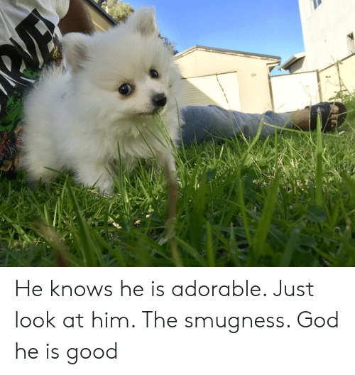Smugness: He knows he is adorable. Just look at him. The smugness. God he is good