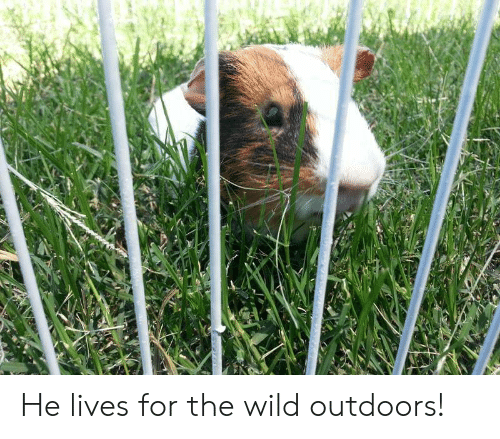 Wild, For, and  Lives: He lives for the wild outdoors!
