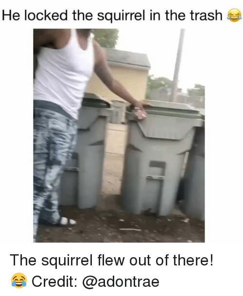 Memes, Trash, and Squirrel: He locked the squirrel in the trash The squirrel flew out of there! 😂 Credit: @adontrae