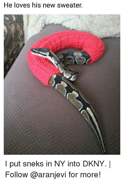 I Putted: He loves his new sweater. I put sneks in NY into DKNY. | Follow @aranjevi for more!