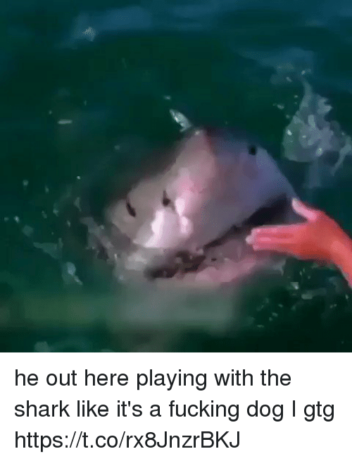 Sharked: he out here playing with the shark like it's a fucking dog I gtg https://t.co/rx8JnzrBKJ