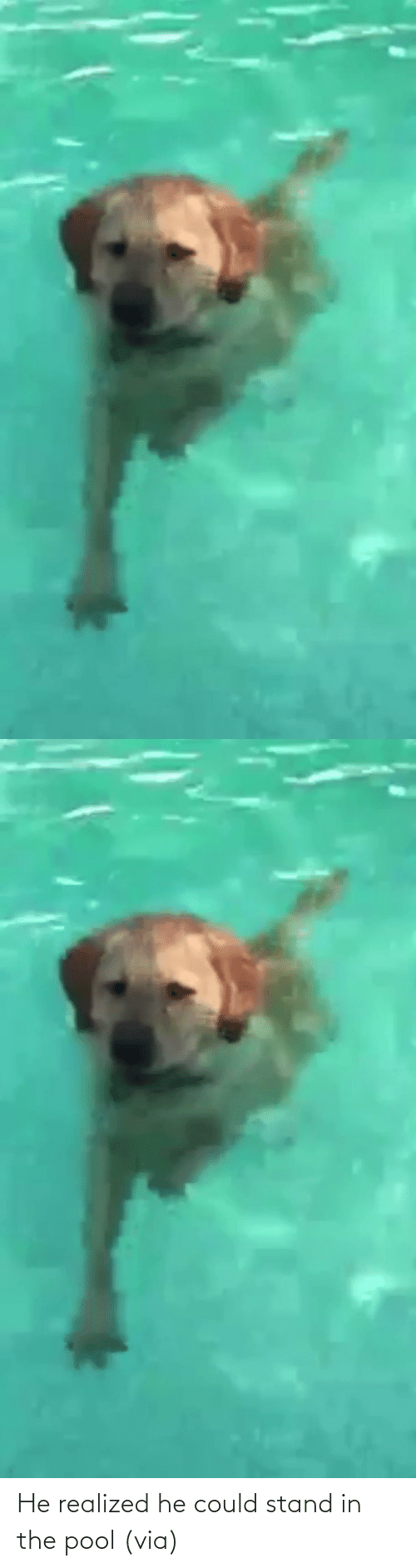 aww: He realized he could stand in the pool (via)