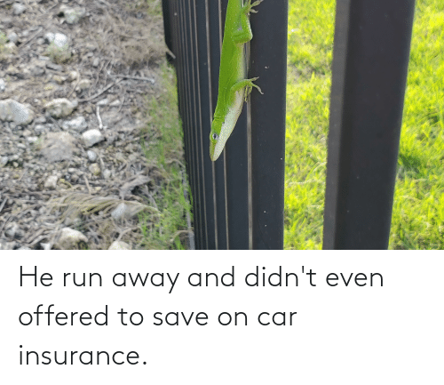 insurance: He run away and didn't even offered to save on car insurance.