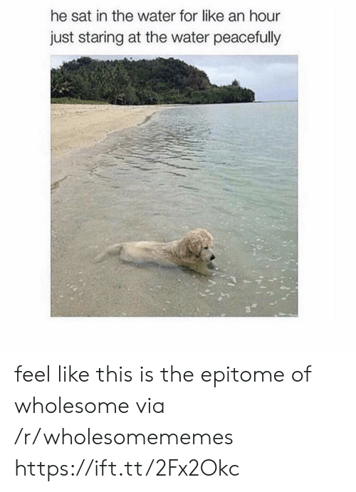 Water, Wholesome, and Sat: he sat in the water for like an hour  just staring at the water peacefully feel like this is the epitome of wholesome via /r/wholesomememes https://ift.tt/2Fx2Okc