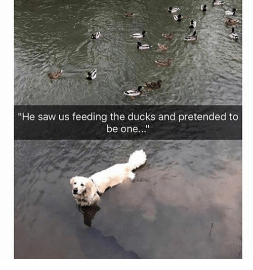 """Dank, Saw, and Ducks: """"He saw us feeding the ducks and pretended to  be one..."""""""