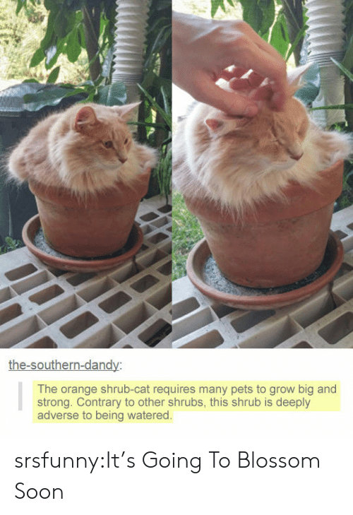 Watered: he-southern-dan  The orange shrub-cat requires many pets to grow big and  strong. Contrary to other shrubs, this shrub is deeply  adverse to being watered srsfunny:It's Going To Blossom Soon