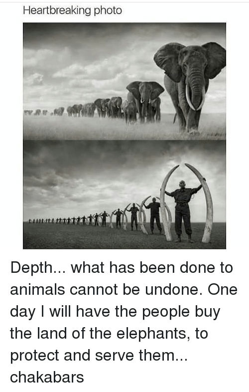 Protect And Serve: Heartbreaking photo Depth... what has been done to animals cannot be undone. One day I will have the people buy the land of the elephants, to protect and serve them... chakabars