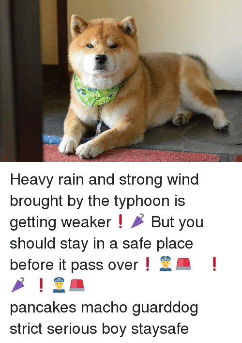 Passe: Heavy rain and strong wind brought by the typhoon is getting weaker❗🌂 But you should stay in a safe place before it pass over❗👮🚨 激しい雨と強風はだんだん弱まってきました❗🌂 だけど台風が通過するまでは安全な場所にいた方がいいですよ❗👮🚨 急がば回れ ジタバタするなよ 世紀末が来ーるぜ だいぶ先にね トイレの番人 邪魔です pancakes macho guarddog strict serious boy staysafe