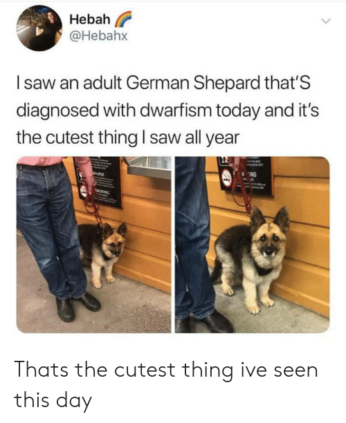Diagnosed: Hebah  @Hebahx  Isaw an adult German Shepard that'S  diagnosed with dwarfism today and it's  the cutest thing I saw all year  ING  MONING Thats the cutest thing ive seen this day