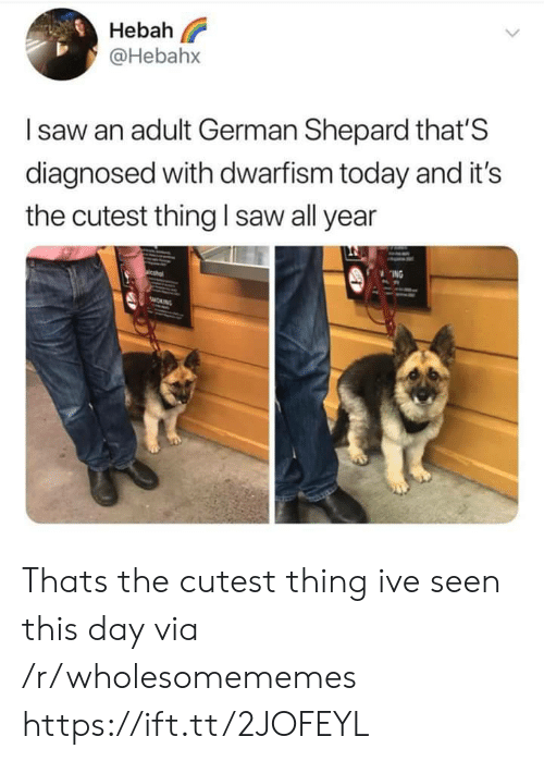 Saw, Today, and German: Hebah  @Hebahx  Isaw an adult German Shepard that'S  diagnosed with dwarfism today and it's  saw all year  the cutest thing  ING  sMORNG Thats the cutest thing ive seen this day via /r/wholesomememes https://ift.tt/2JOFEYL