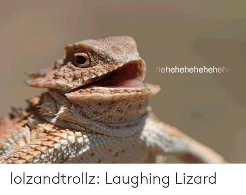 Tumblr, Blog, and Com: hehehehehehehehe lolzandtrollz:  Laughing Lizard