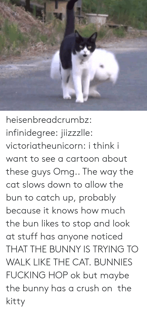 Bunnies: heisenbreadcrumbz: infinidegree:  jiizzzlle:  victoriatheunicorn:  i think i want to see a cartoon about these guys  Omg.. The way the cat slows down to allow the bun to catch up, probably because it knows how much the bun likes to stop and look at stuff  has anyone noticed THAT THE BUNNY IS TRYING TO WALK LIKE THE CAT. BUNNIES FUCKING HOP   ok but maybe the bunny has a crush on  the kitty