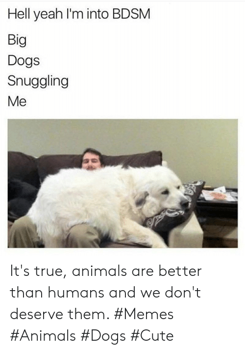 snuggling: Hell yeah I'm into BDSM  Big  Dogs  Snuggling  Me It's true, animals are better than humans and we don't deserve them. #Memes #Animals #Dogs #Cute