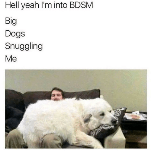 snuggling: Hell yeah l'm into BDSM  Big  Dogs  Snuggling  Me