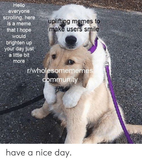 Uplifting Memes: Hello  everyone  scrolling, here  is a meme  uplifting memes to  make users smile  that I hope  would  brighten up  your day just  a little bit  more  r/wholesomememes  community have a nice day.
