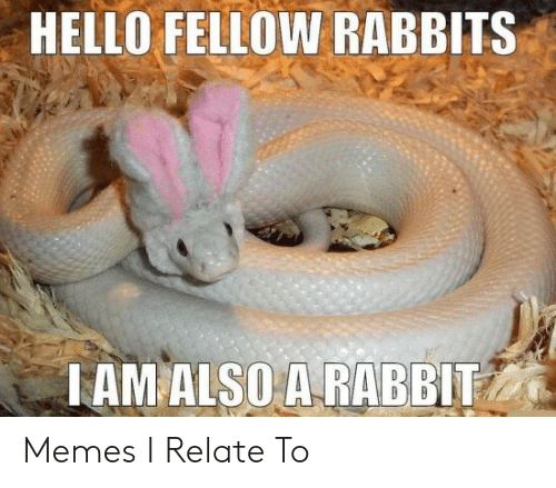 Rabbit: HELLO FELLOW RABBITS  TAM ALSO A RABBIT Memes I Relate To