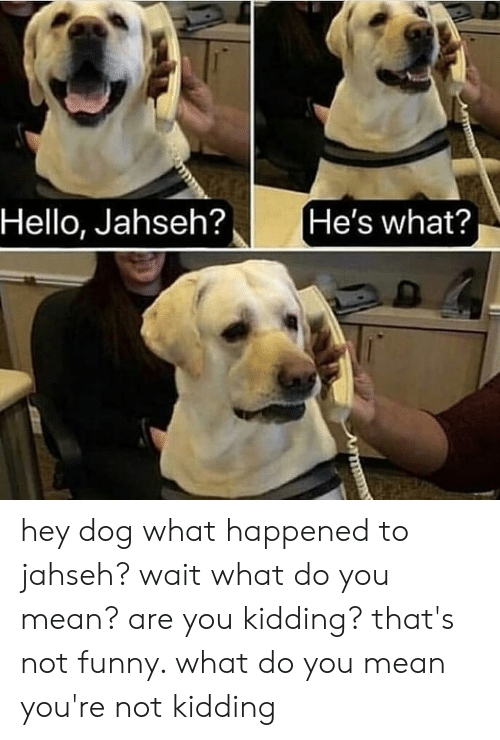 Funny, Hello, and Memes: Hello, Jahseh?  He's what? hey dog what happened to jahseh? wait what do you mean? are you kidding? that's not funny. what do you mean you're not kidding